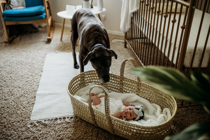 Salt Lake City Birth and Family Photography, dog looking at baby in basket